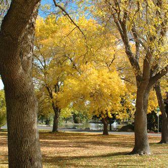 Fall, autumn, Idlewild Park, Reno, Nevada, NV