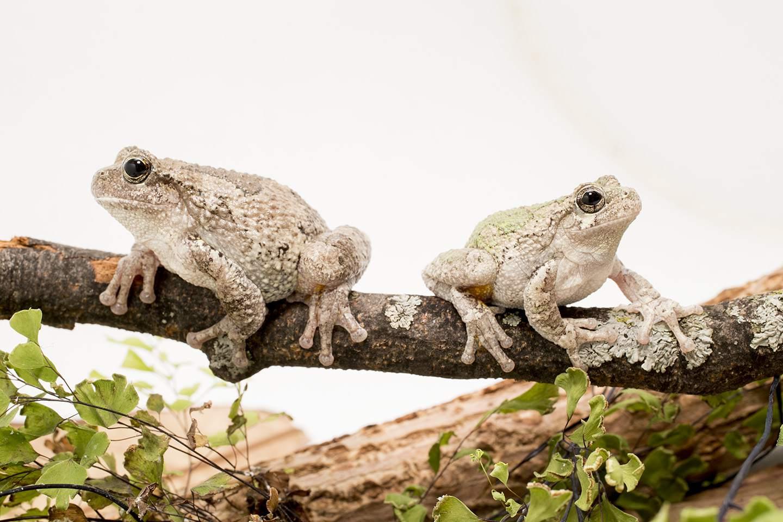 Amphibians Exhibition at Shedd Aquarium