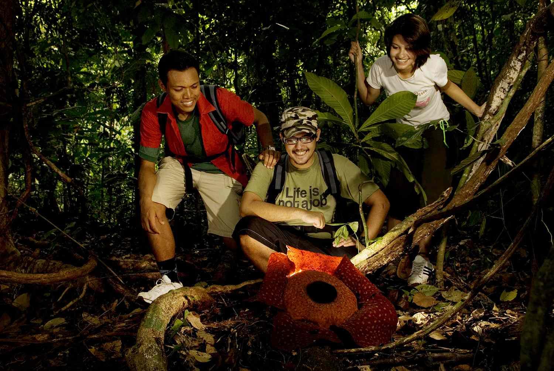 Observación de Rafflesia en el Parque Gunung Gading, Malasia