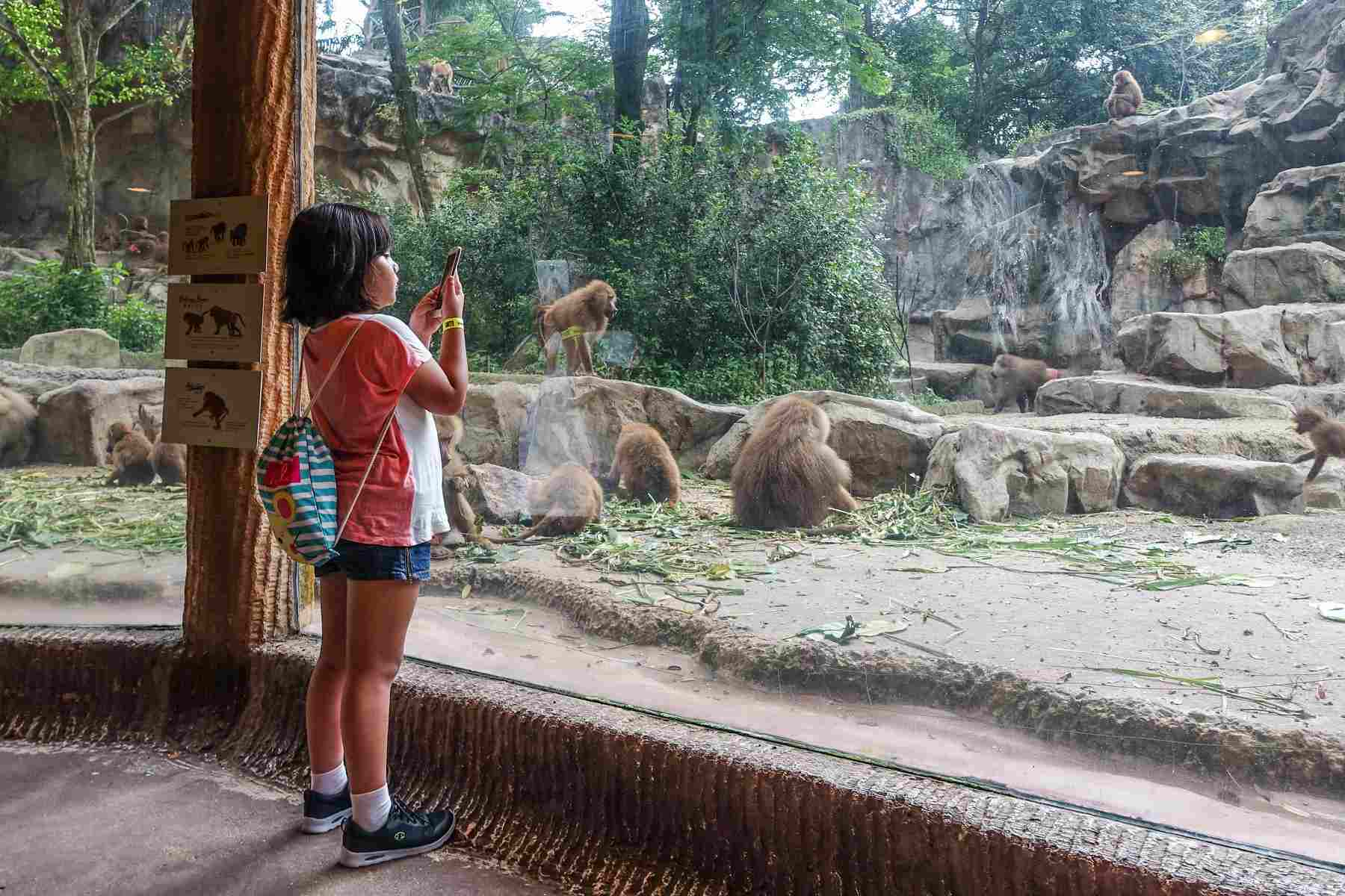 Kid photographing baboons at Singapore Zoo
