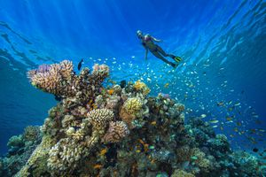 Egypt, Red Sea, Hurghada, young woman snorkeling at coral reef