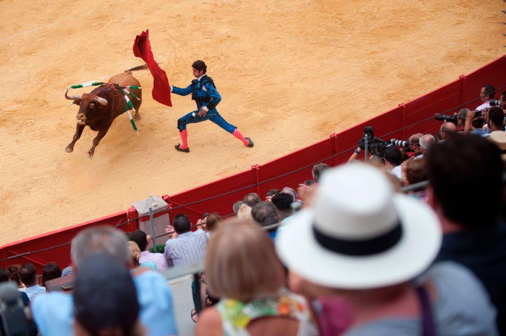 Spanish matador Cayetano Rivera performs a pass on a bull during the Corpus bullfight festival at Granada bullring