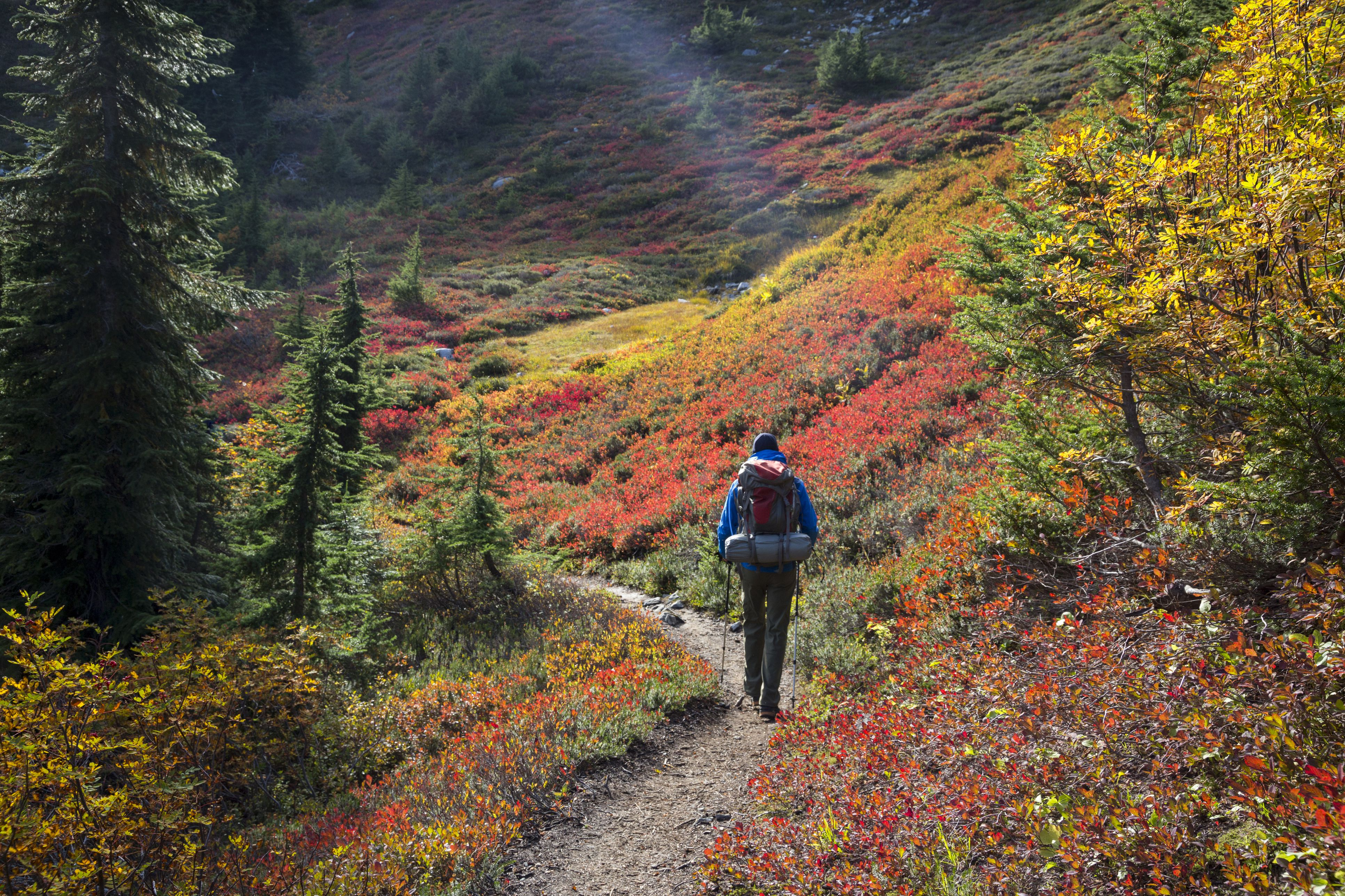 Cascade Pass trail in the North Cascades National Park