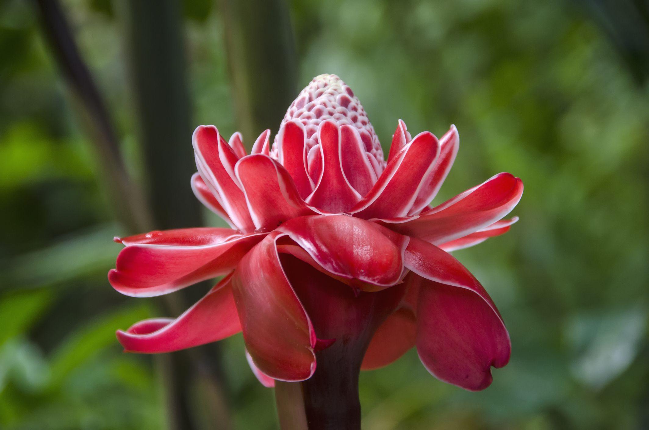 French Polynesian Flowers