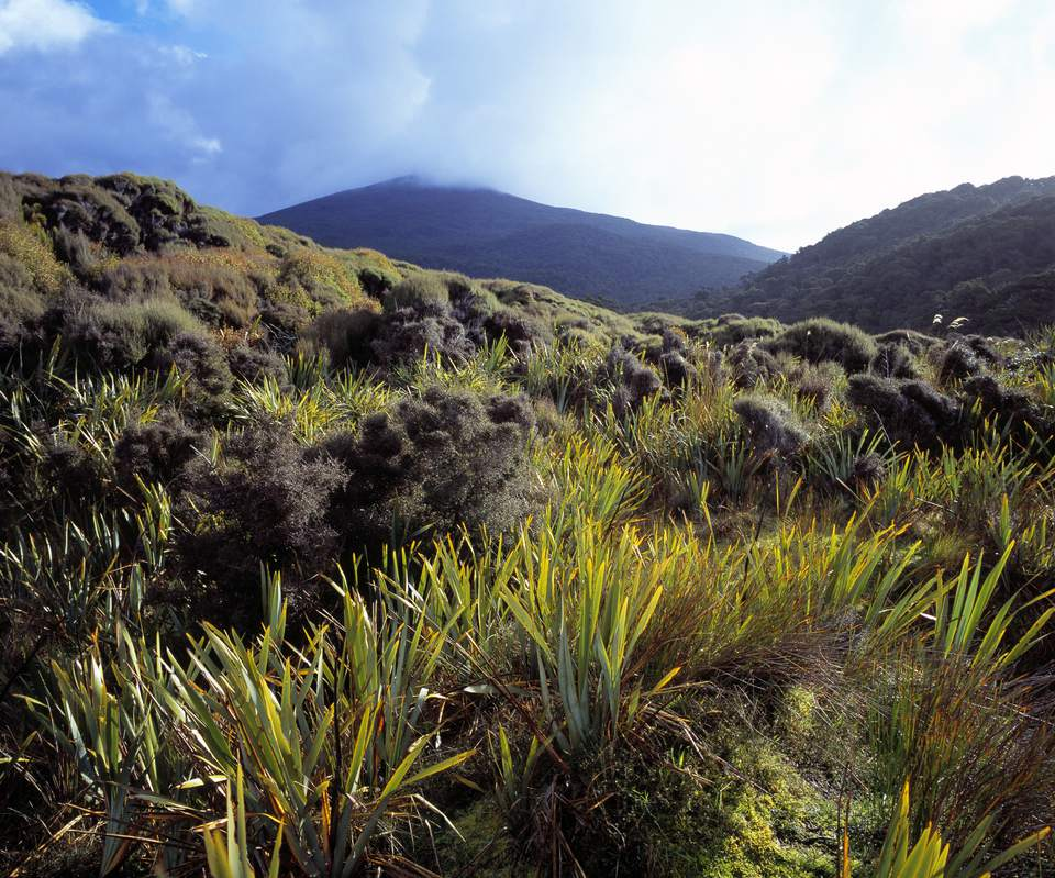Five Must See Places in New Zealands South Island | New