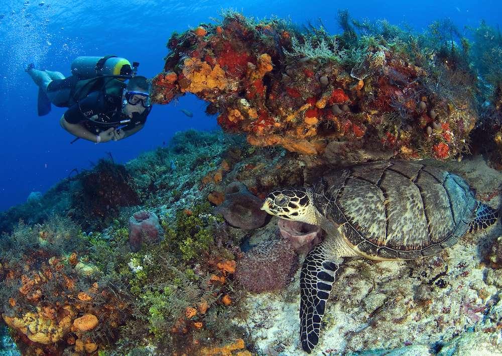scuba diving the Riviera Maya
