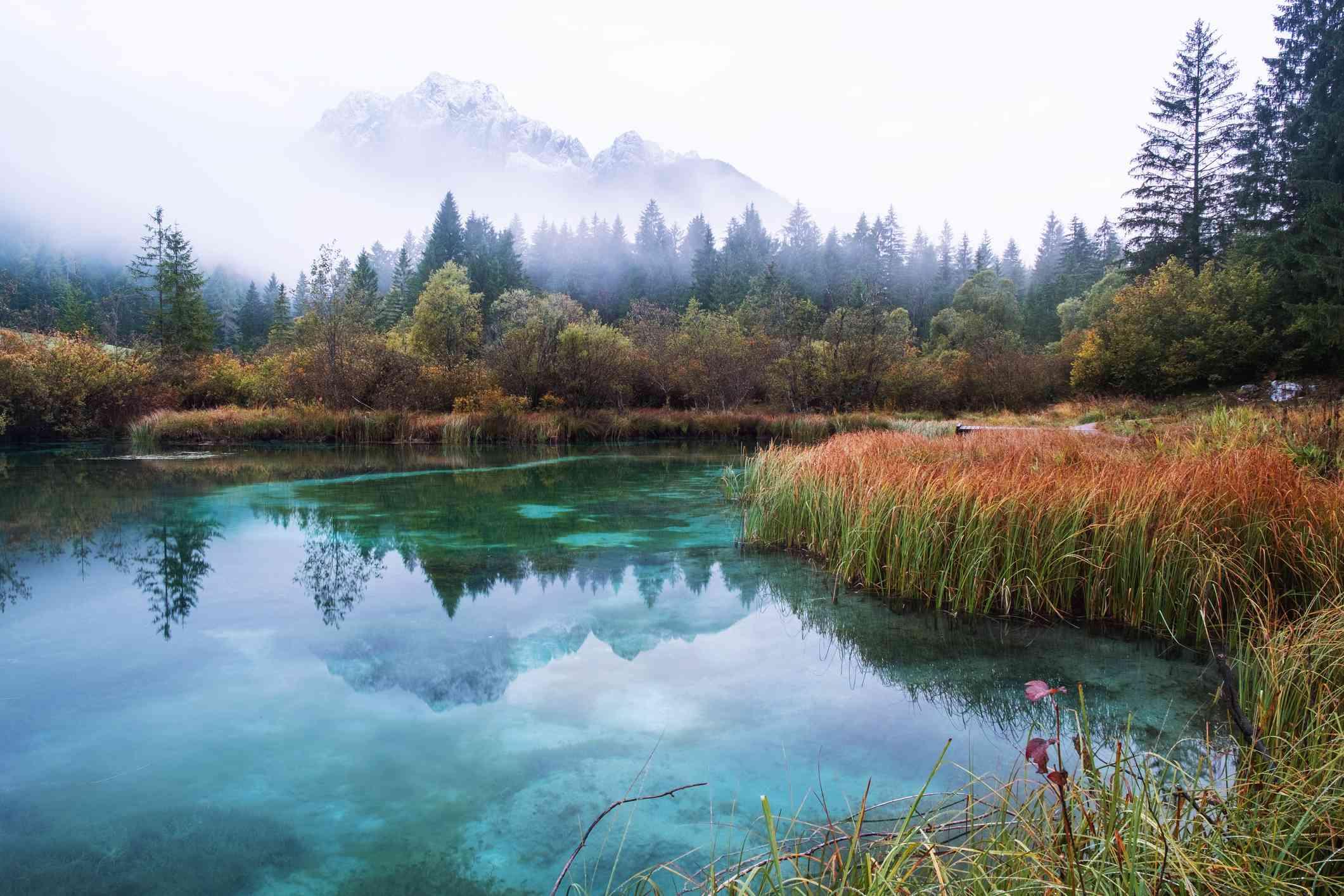 Autumn in Zelenci nature reserve