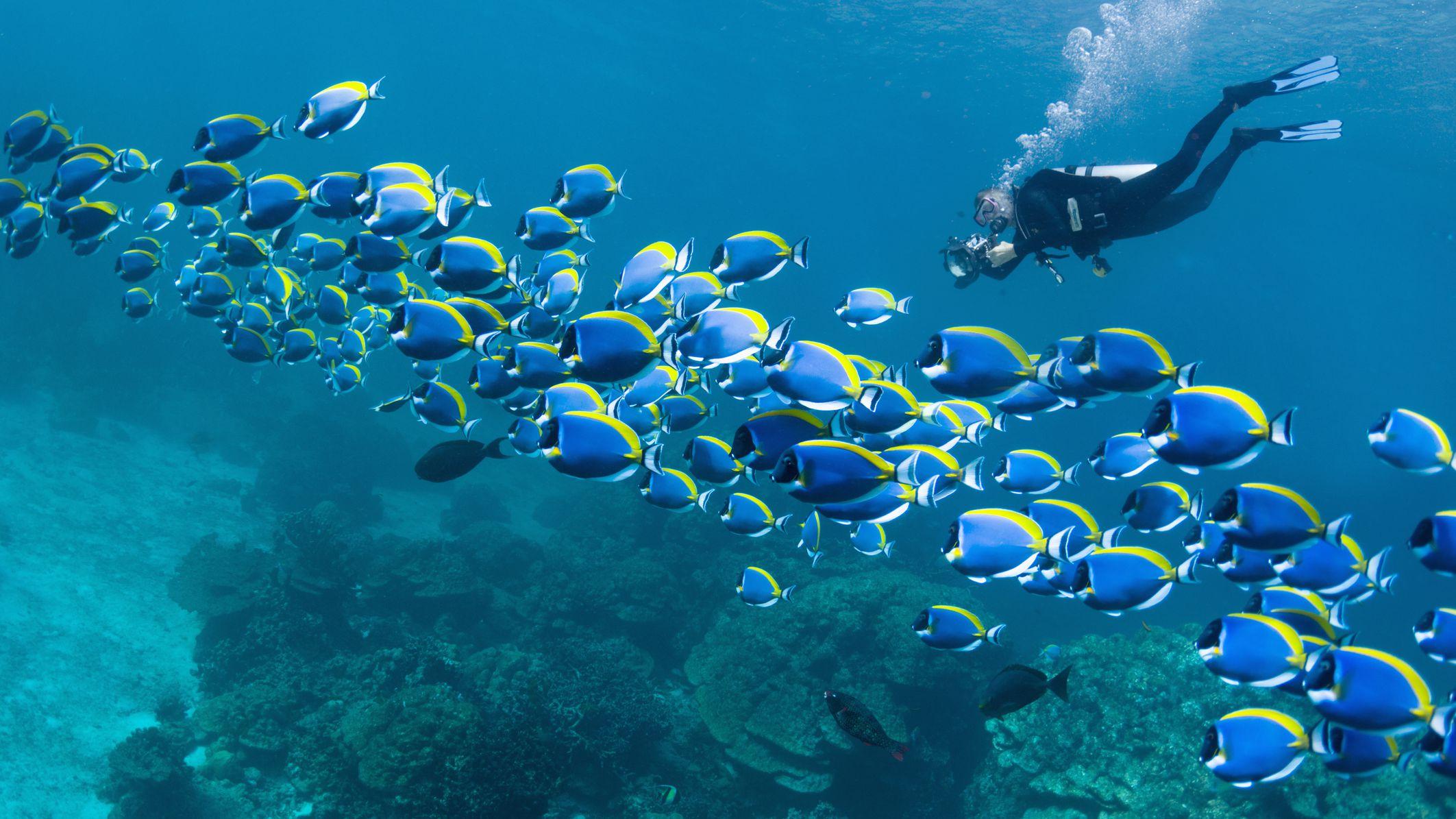 The World S Best Scuba Diving Destinations