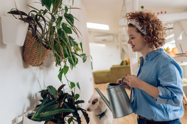 Cute woman watering plants at home