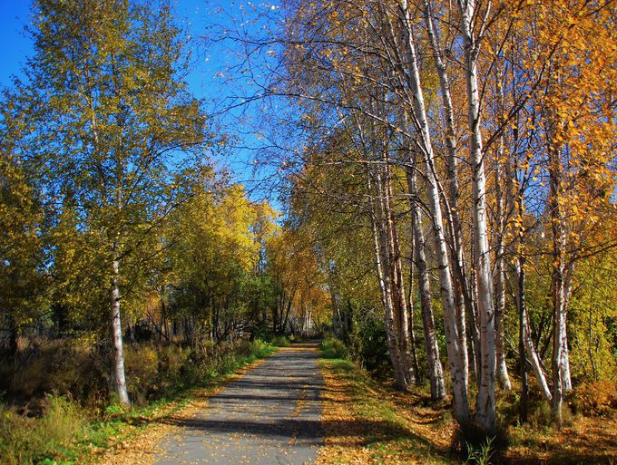Autumn Light Campbell Creek Trail Anchorage Alaska