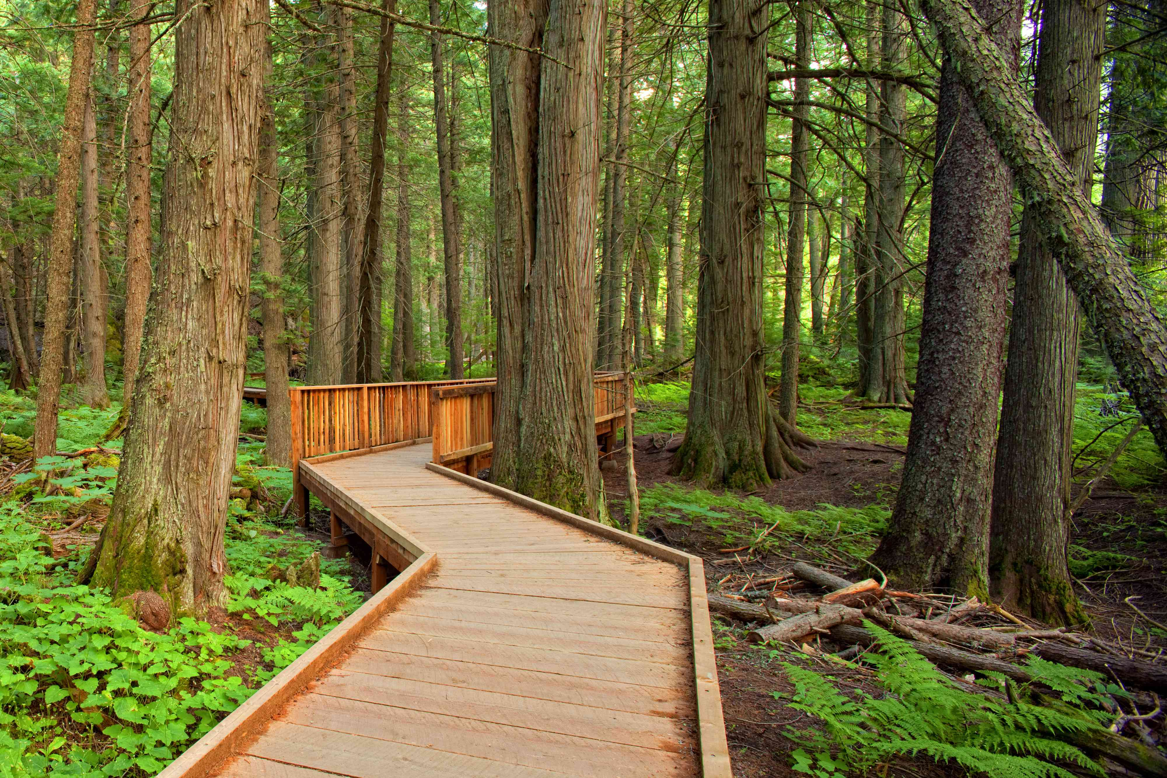 Trail of the Cedars in Glacier National Park, Montana
