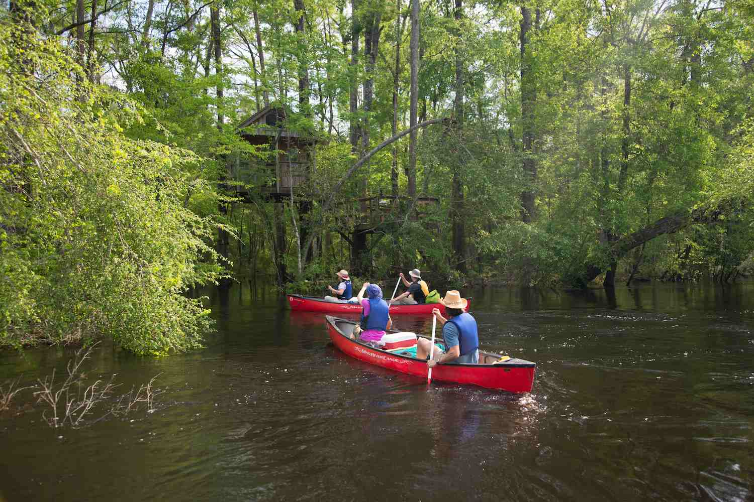 Arriving at an Edisto River Tree House by canoe