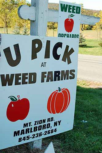Weed Farms U Pick Marlboro New York Photo