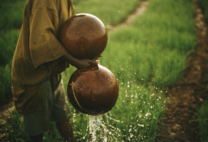 Watering Crops with Gourds, Mali