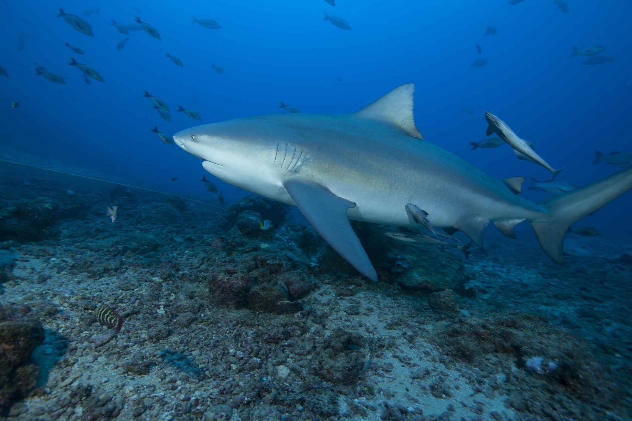 The Top Four Scuba Diving Sites of Costa Rica