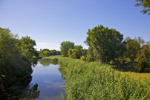 Stream, green plants and trees in Boston's Fens