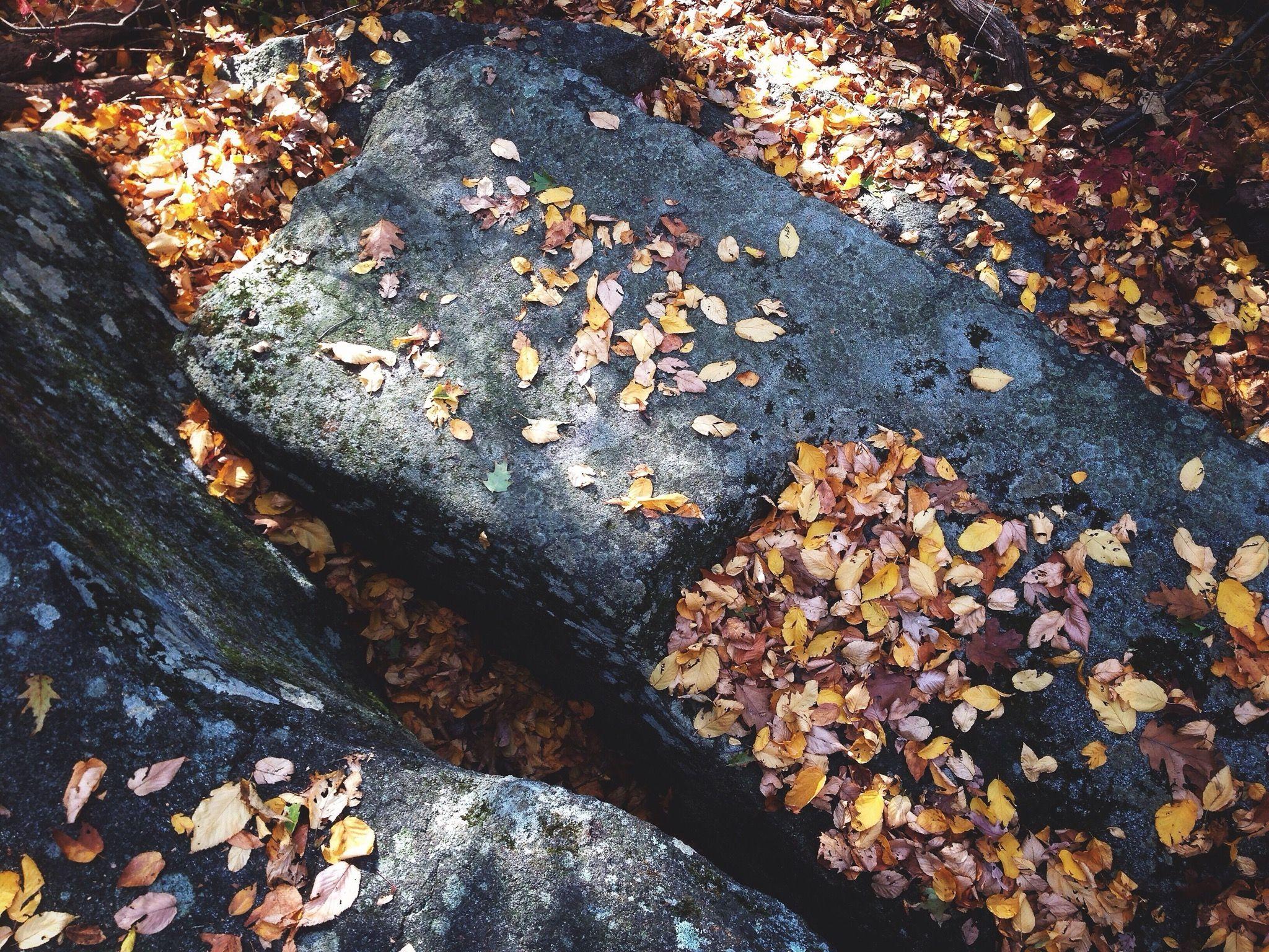 Autumn leaves on rocks
