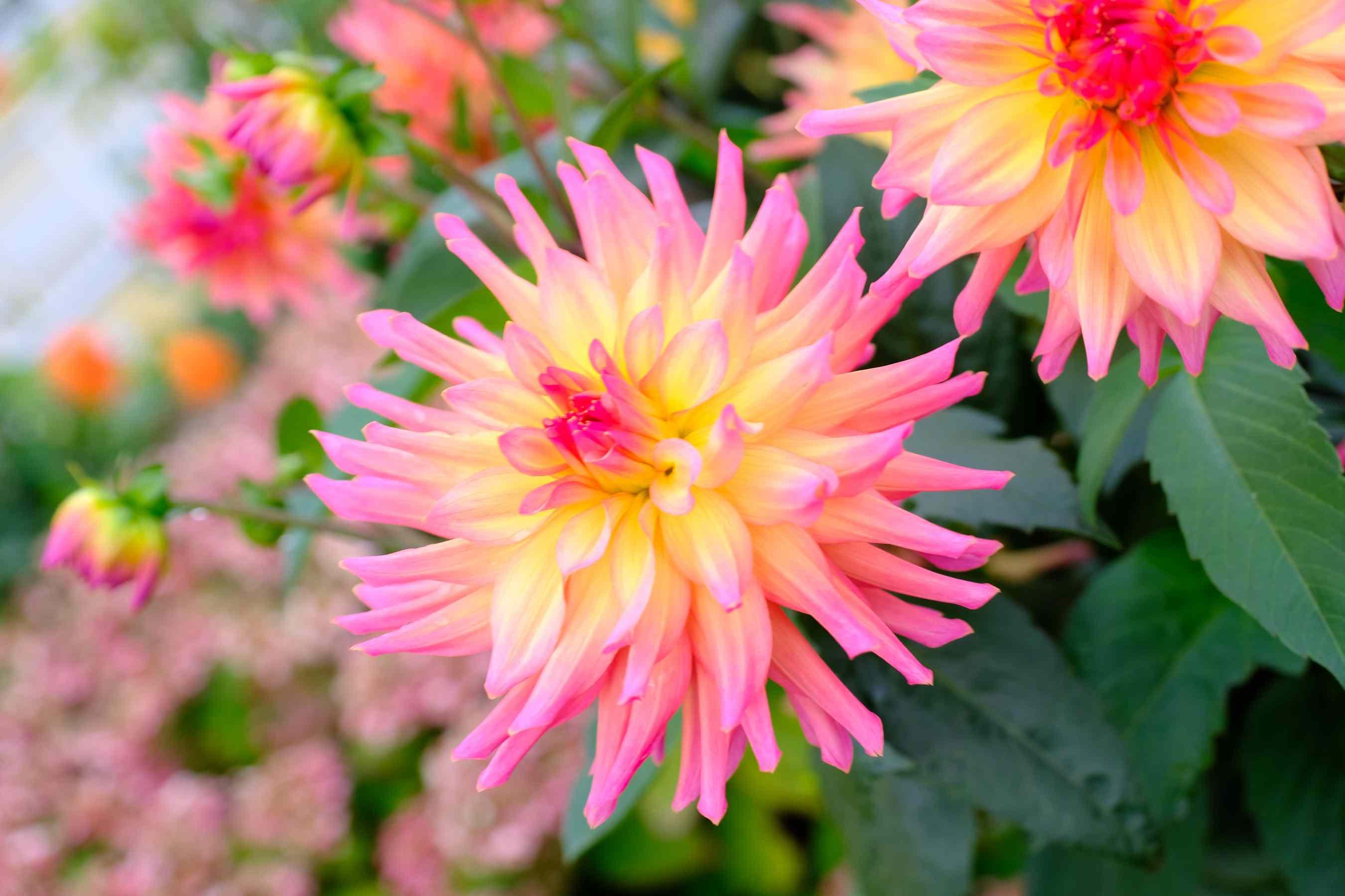 Flowers in a garden on Bainbridge Island