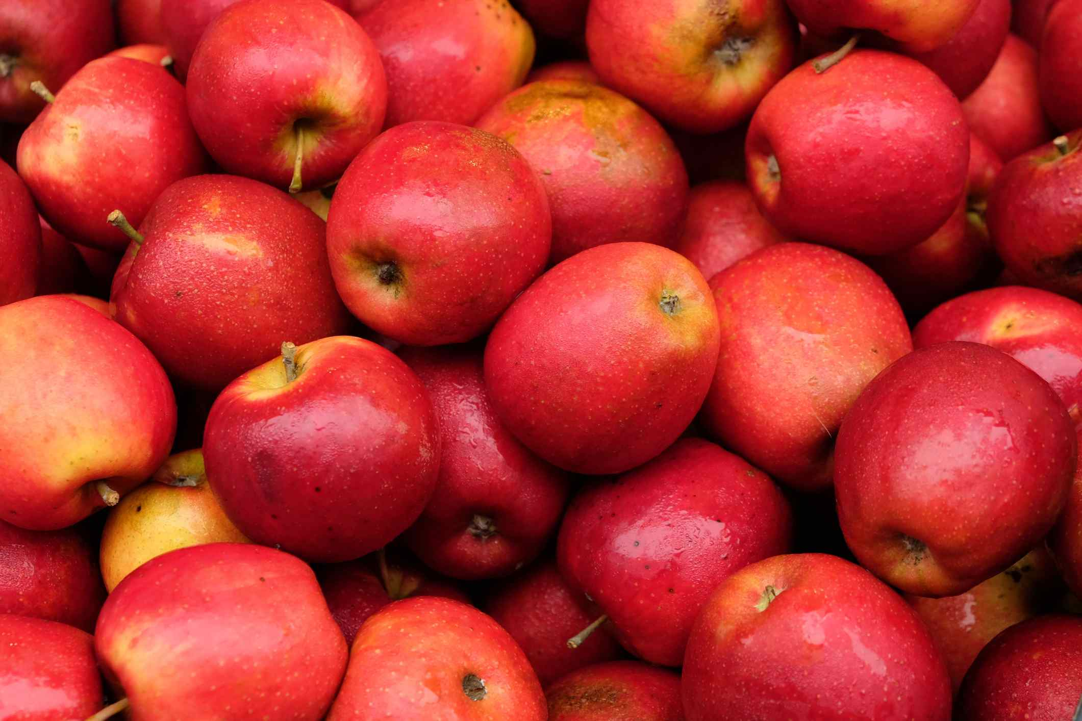 Elija sus propias manzanas en Julian, California