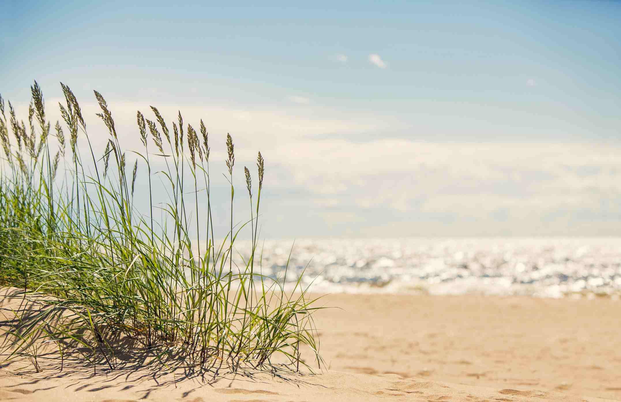 Sand dunes next to the beach