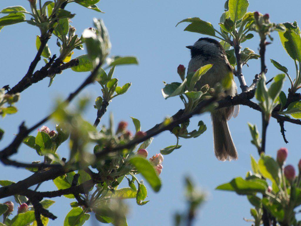 Tommy Thompson Park Spring Bird Festival