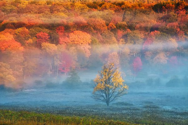 Mist and forest in Fall colors, Davis, West Virginia, USA