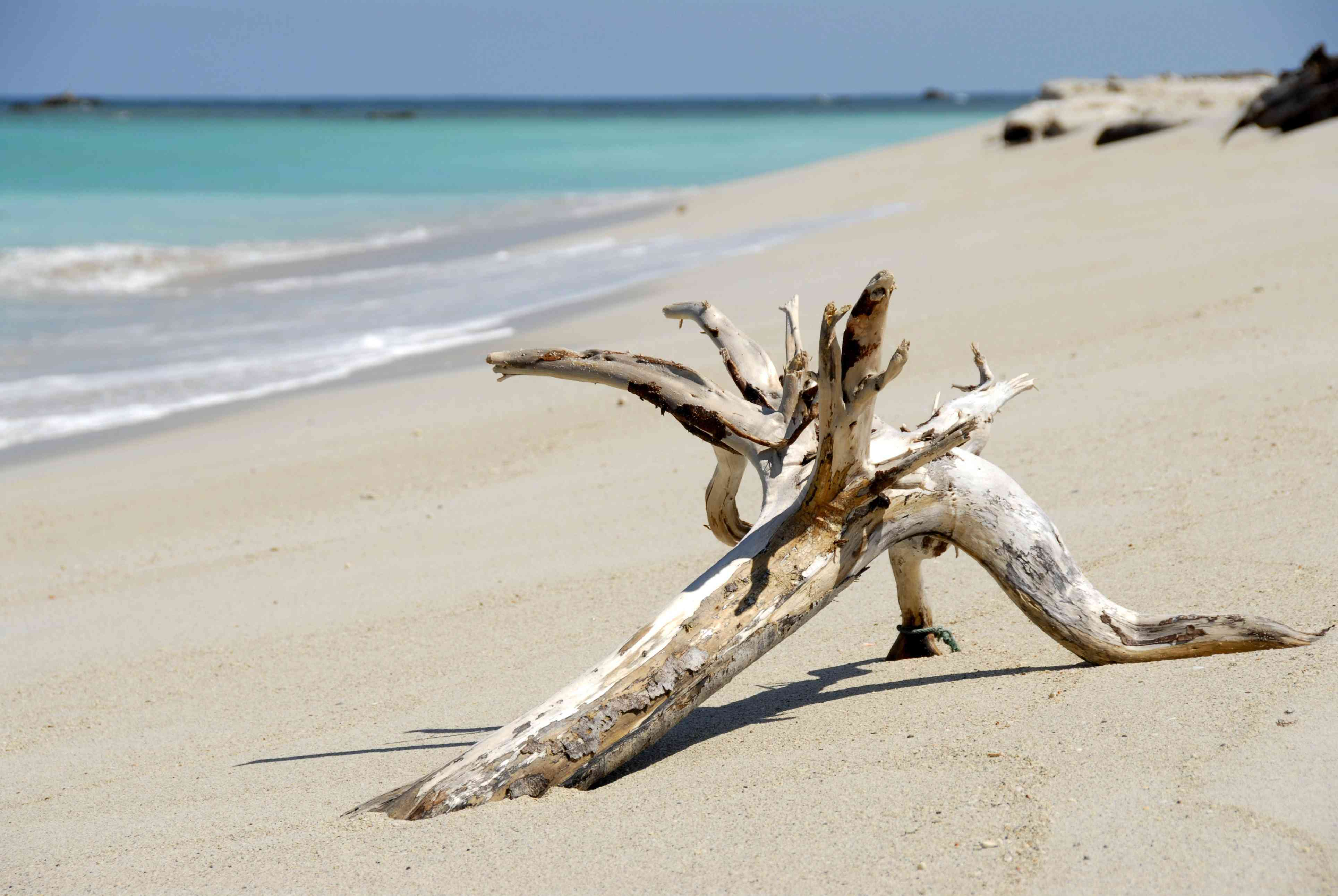 Driftwood on the beach at Tiga Island, Borneo
