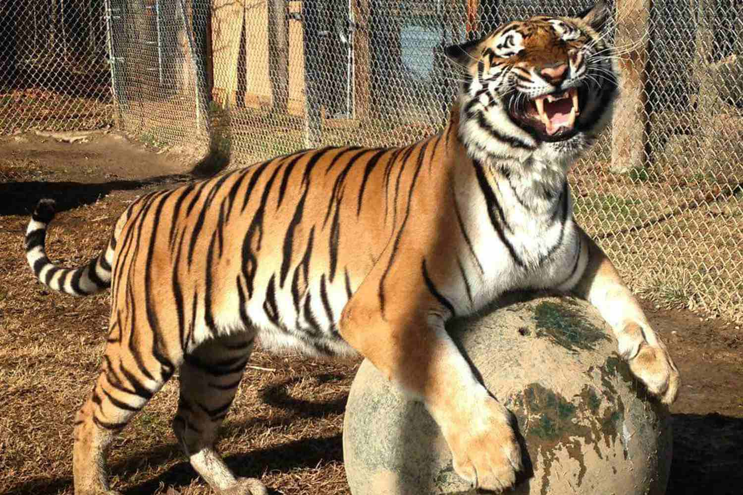 Zoos in Charlotte and Surrounding Areas
