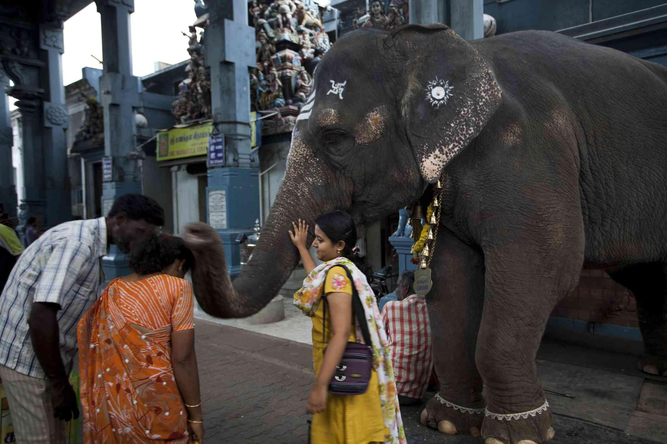 Elephant at temple in Pondicherry.