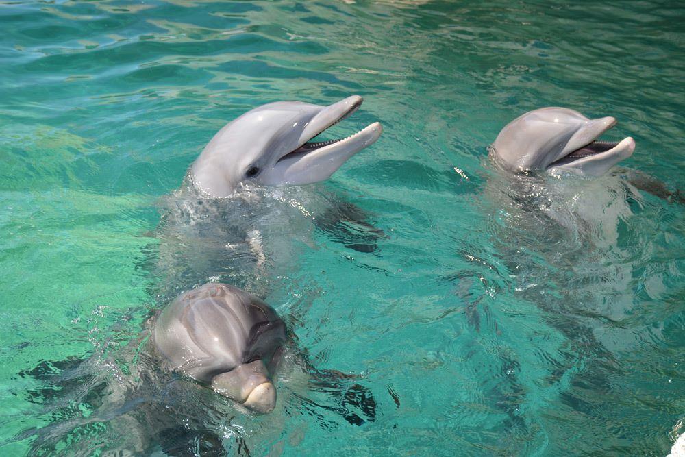 Dolphins at Dolphinaris Arizona