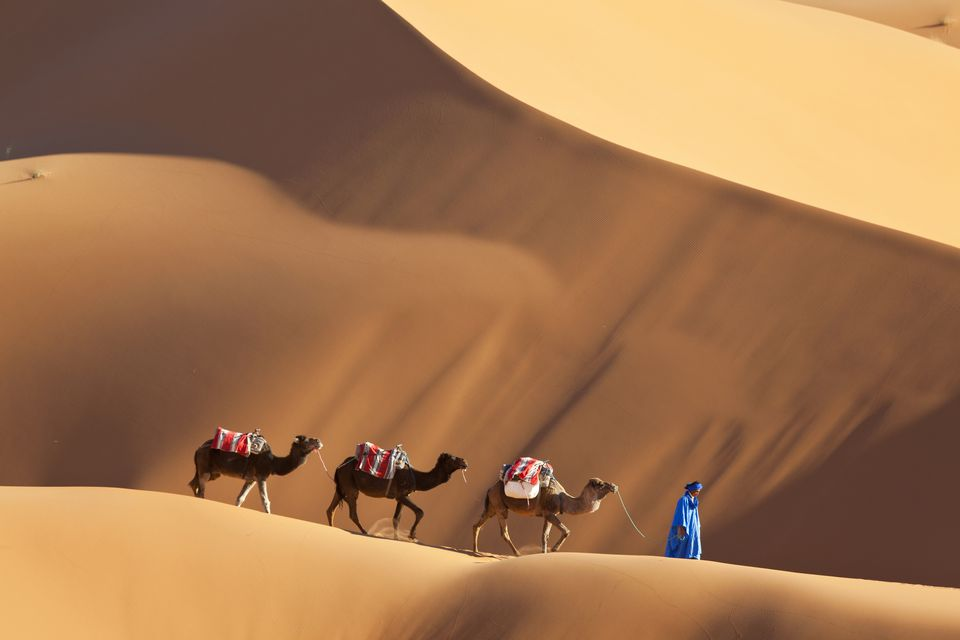 Camels in the Dunes Near Merzouga, Morocco