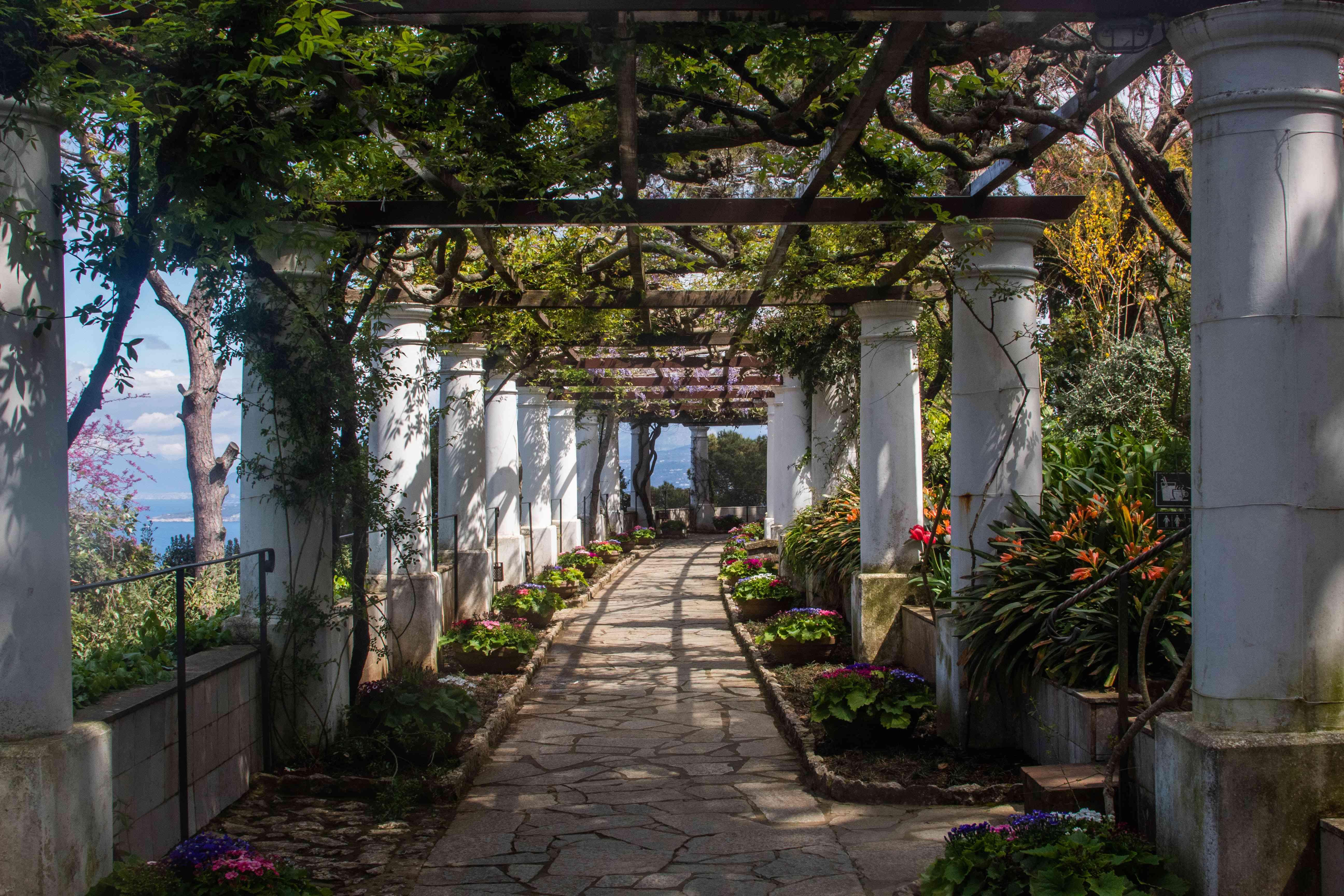 A garden walkway