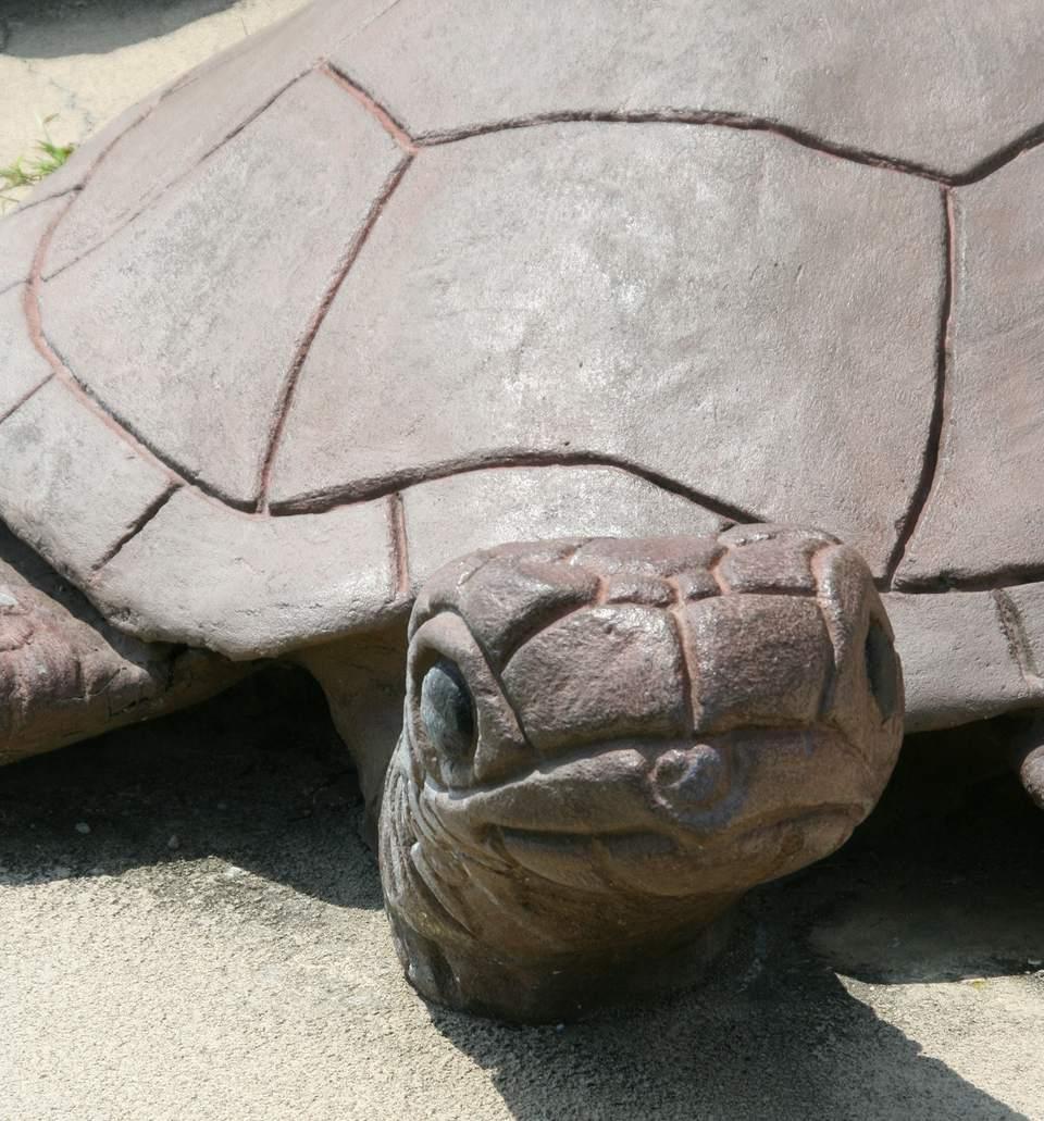 Sea Turtle Statue