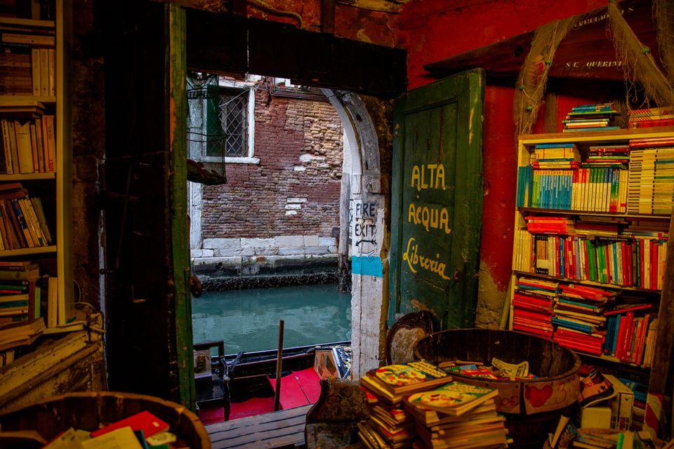 Cats at Libreria Acqua Alta in Venice, Italy