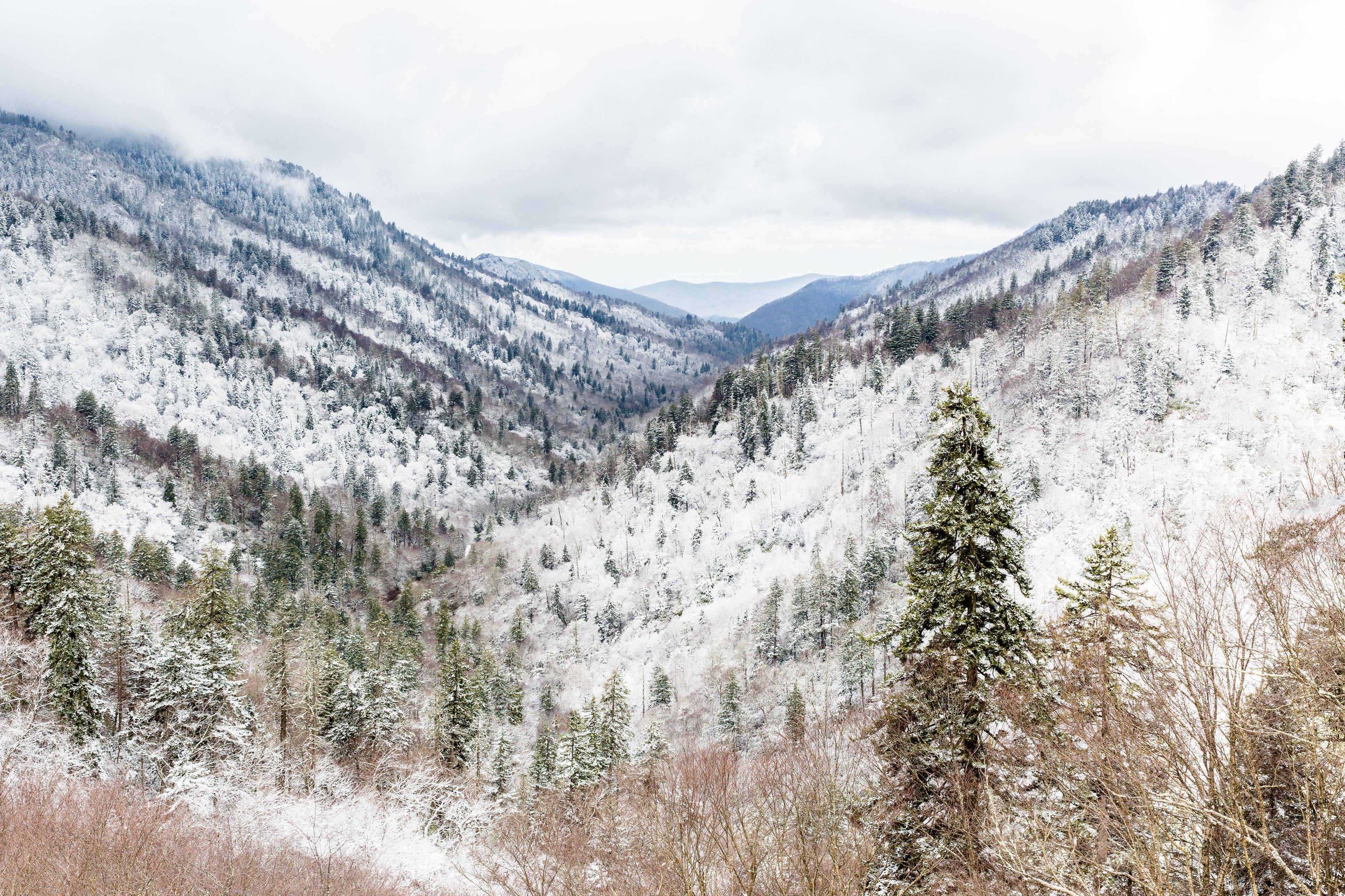 Winter Scene in Great Smoky Mountains National Park
