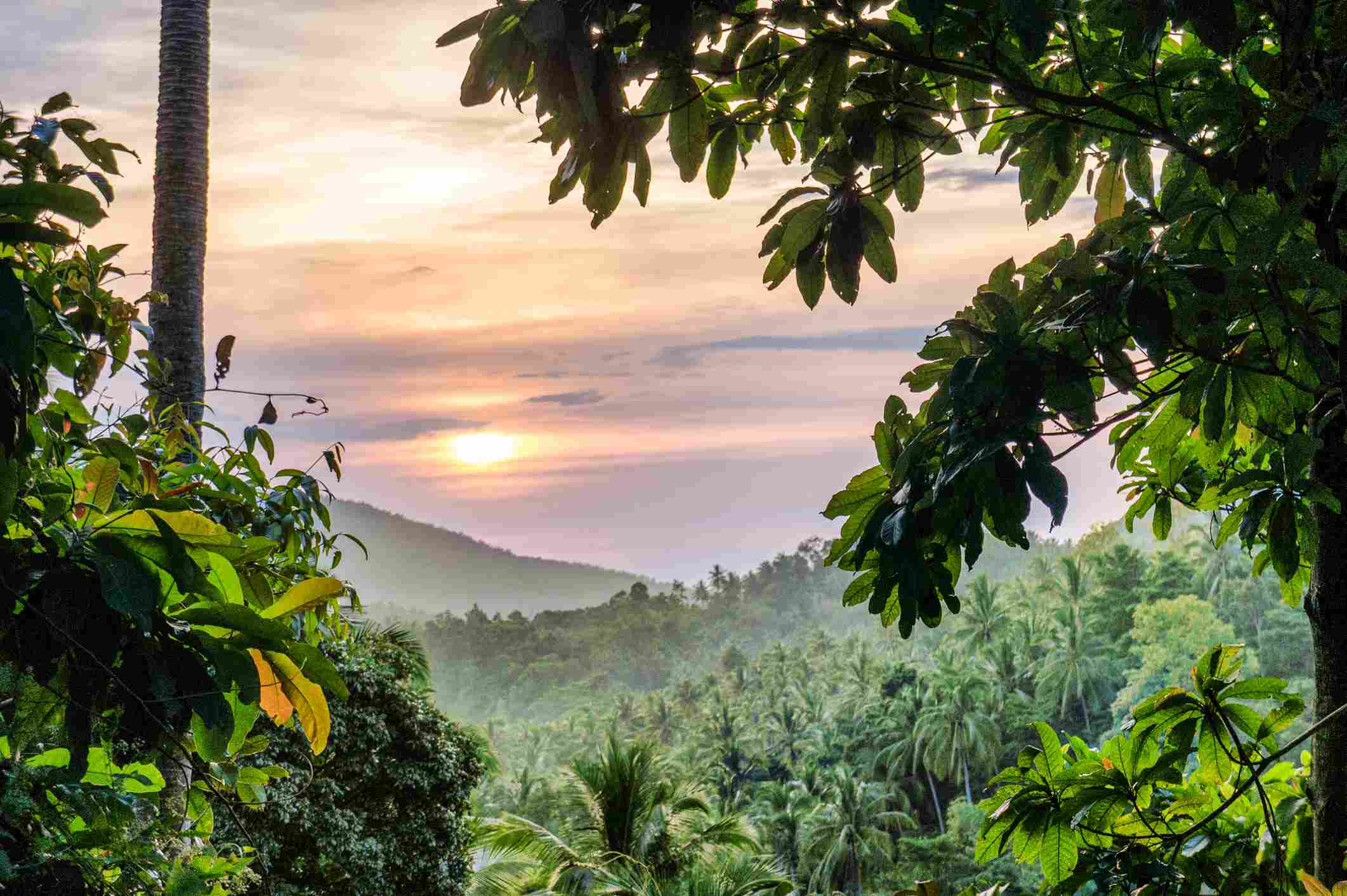Looking out over the lush treetops in Thailand