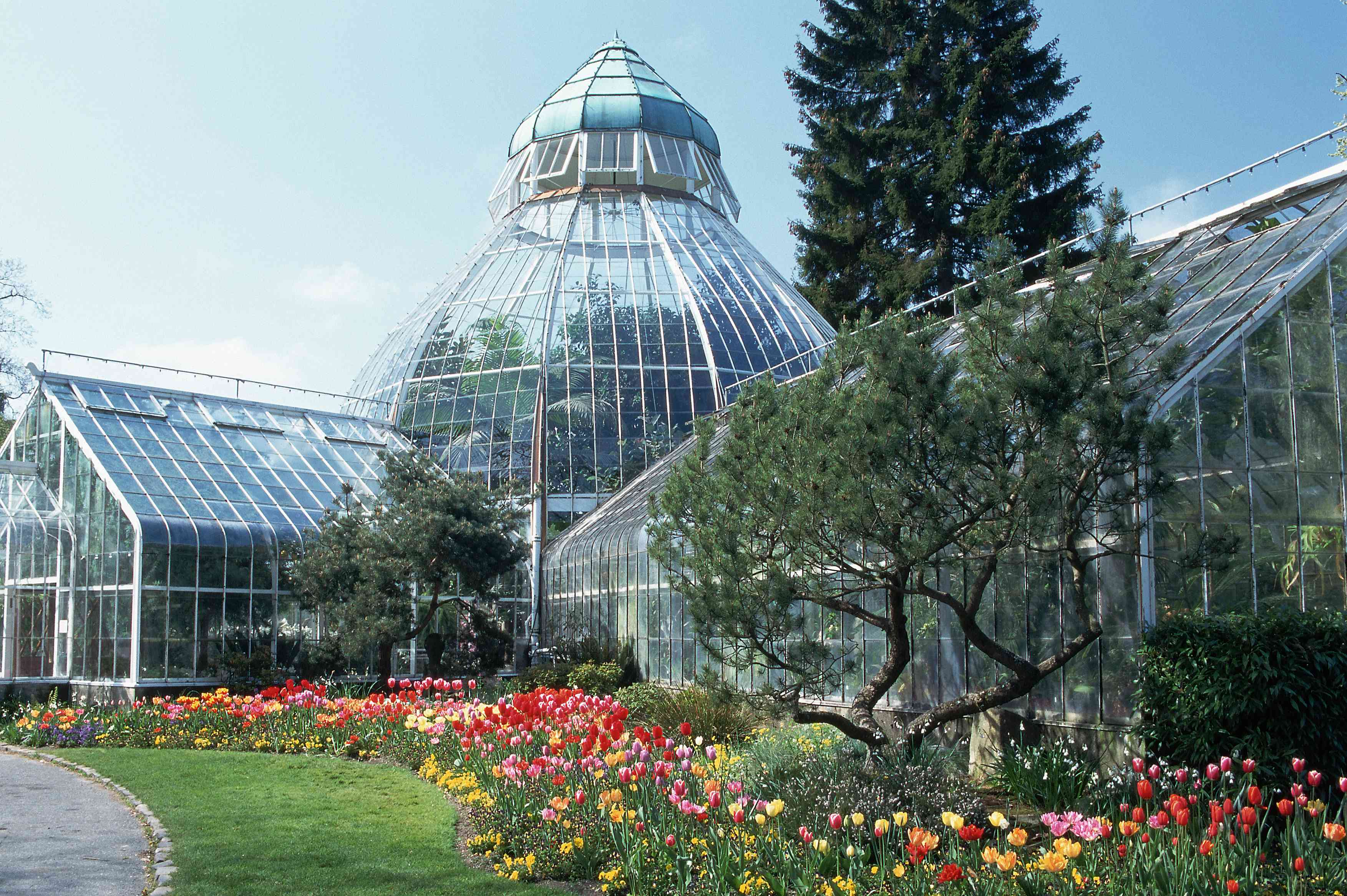 Carefully landscaped tulip bed surround the greenhouse of the Wright Park Conservatory in Tacoma, Washington