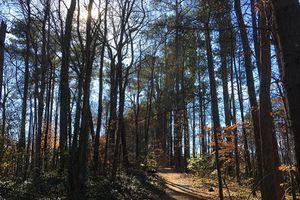 Morningside Nature Preserve