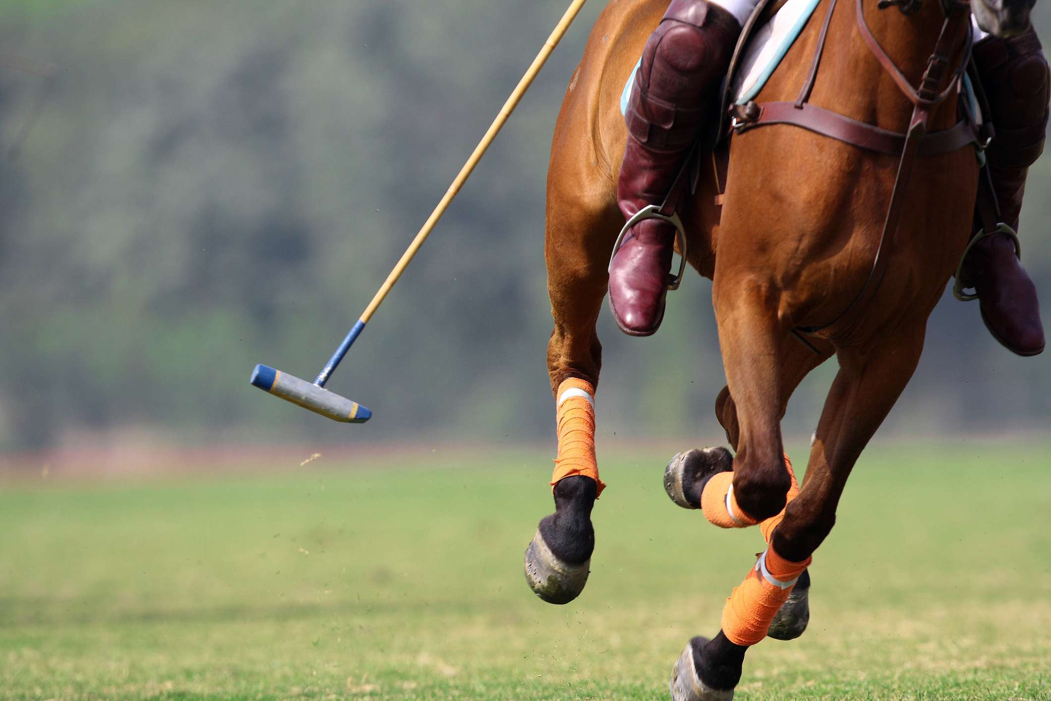 National Polo Championship