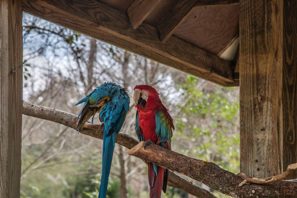 two birds sitting on a tree beach in Central Florida Zoo