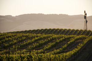 Vineyards and windmill near Sonoma, CA.