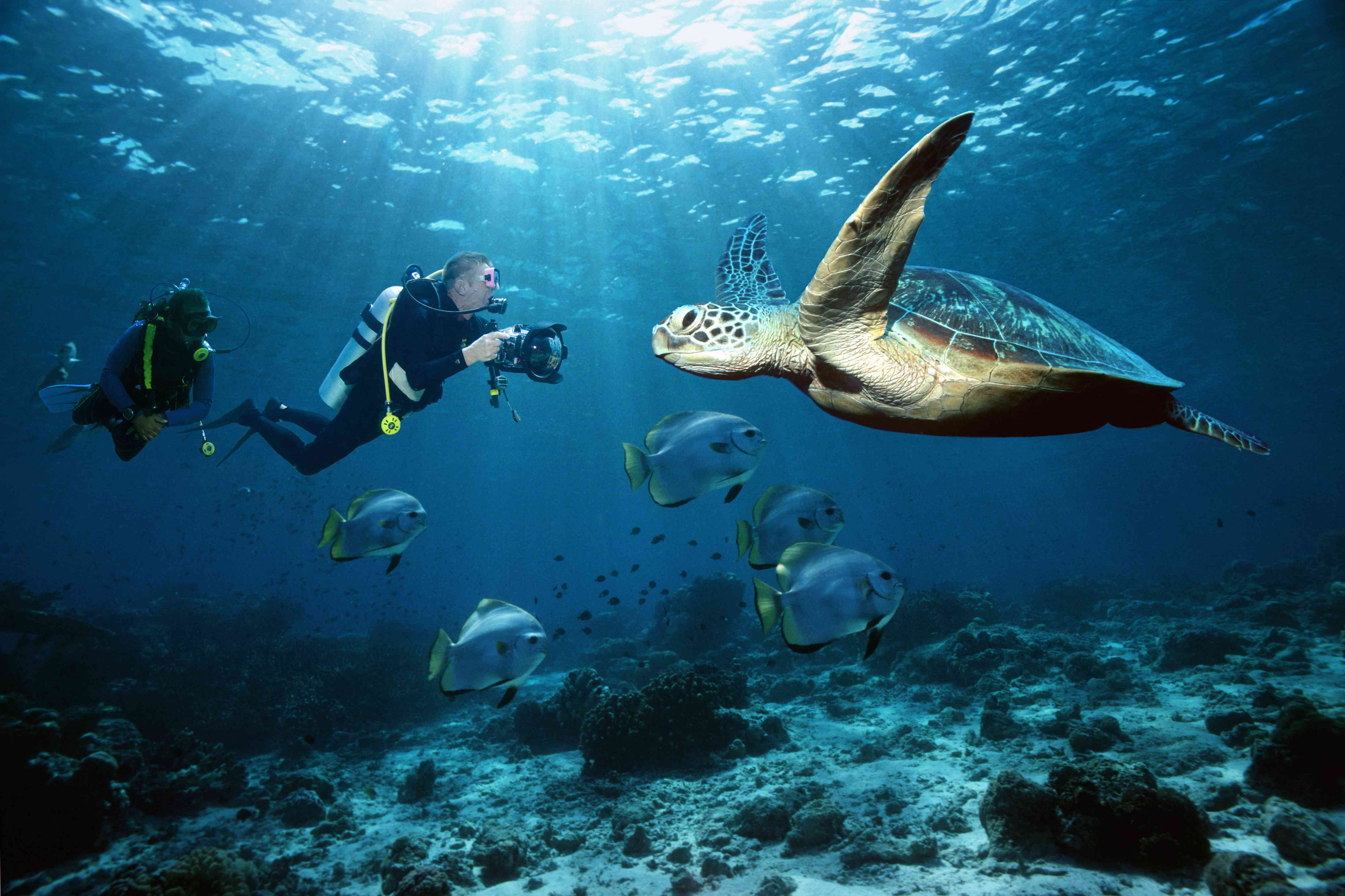 Scuba divers photographing a sea turtle in Thailand