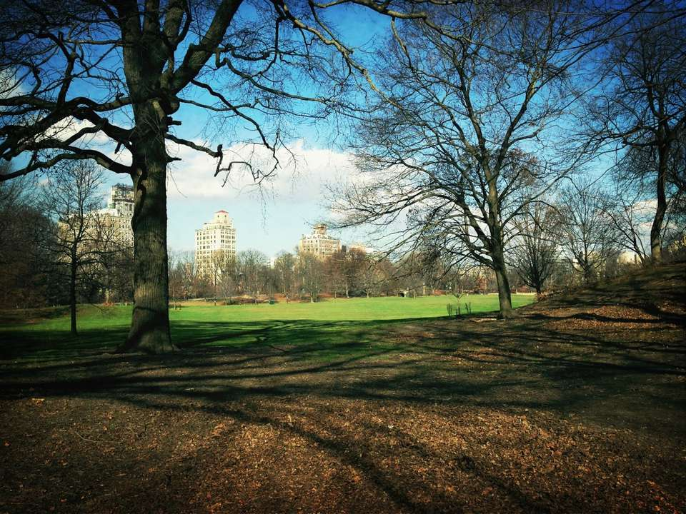 View of Prospect Park