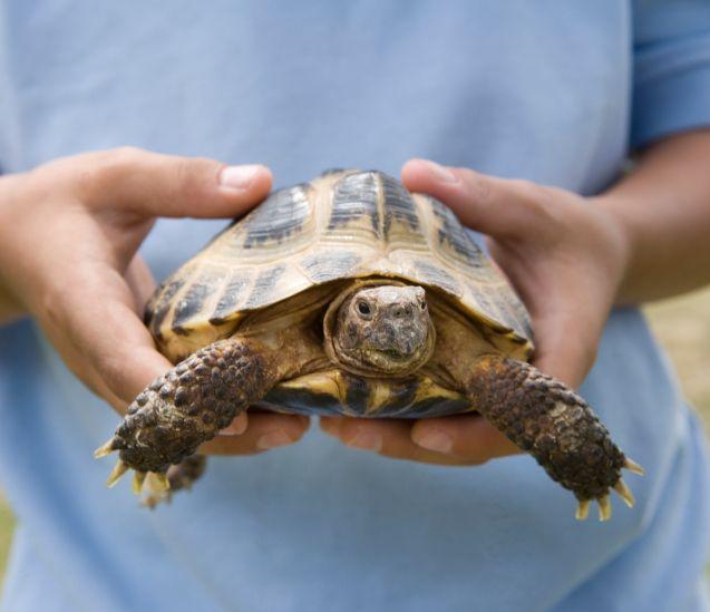 turtle2.jpg
