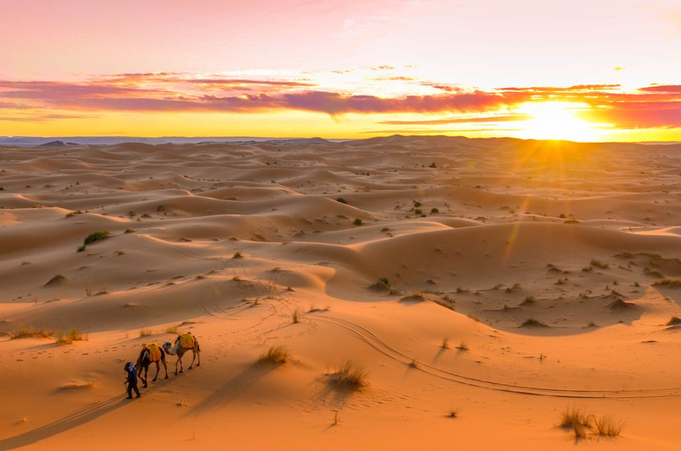 Sunset over the desert in Libya with camels in the foreground