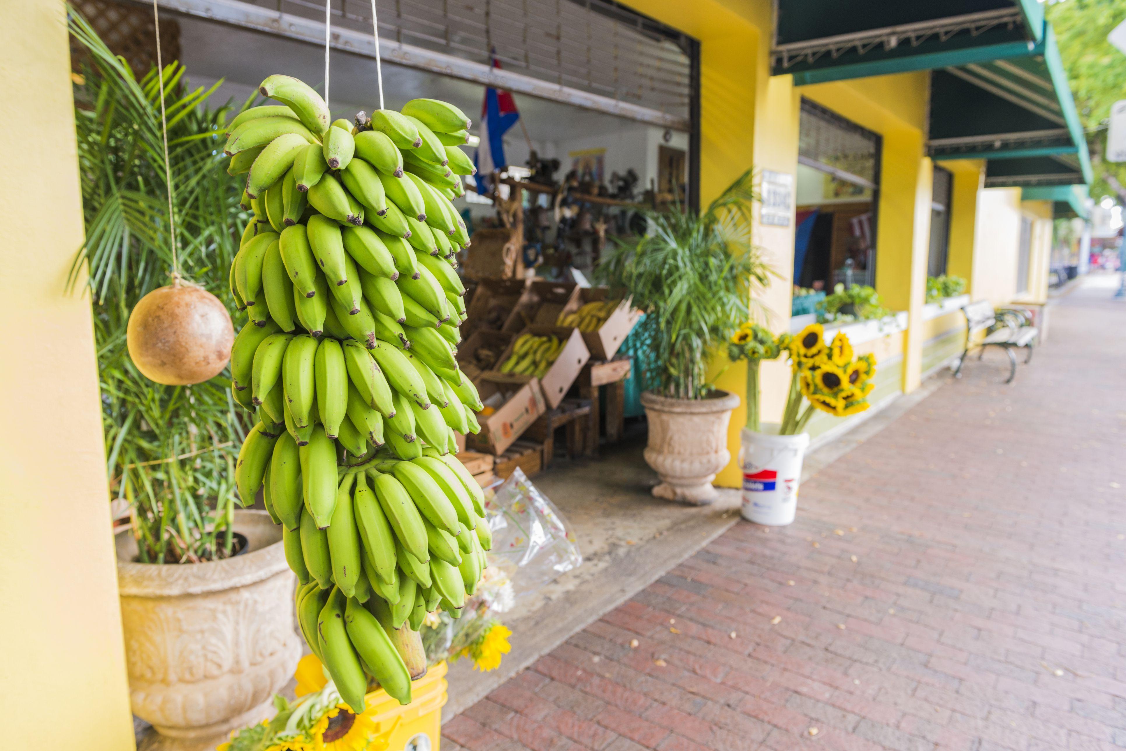 Bananas For Sale Miami Little Havana Business on Calle Ocho