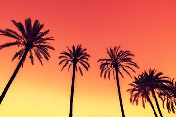 Phoenix Summer
