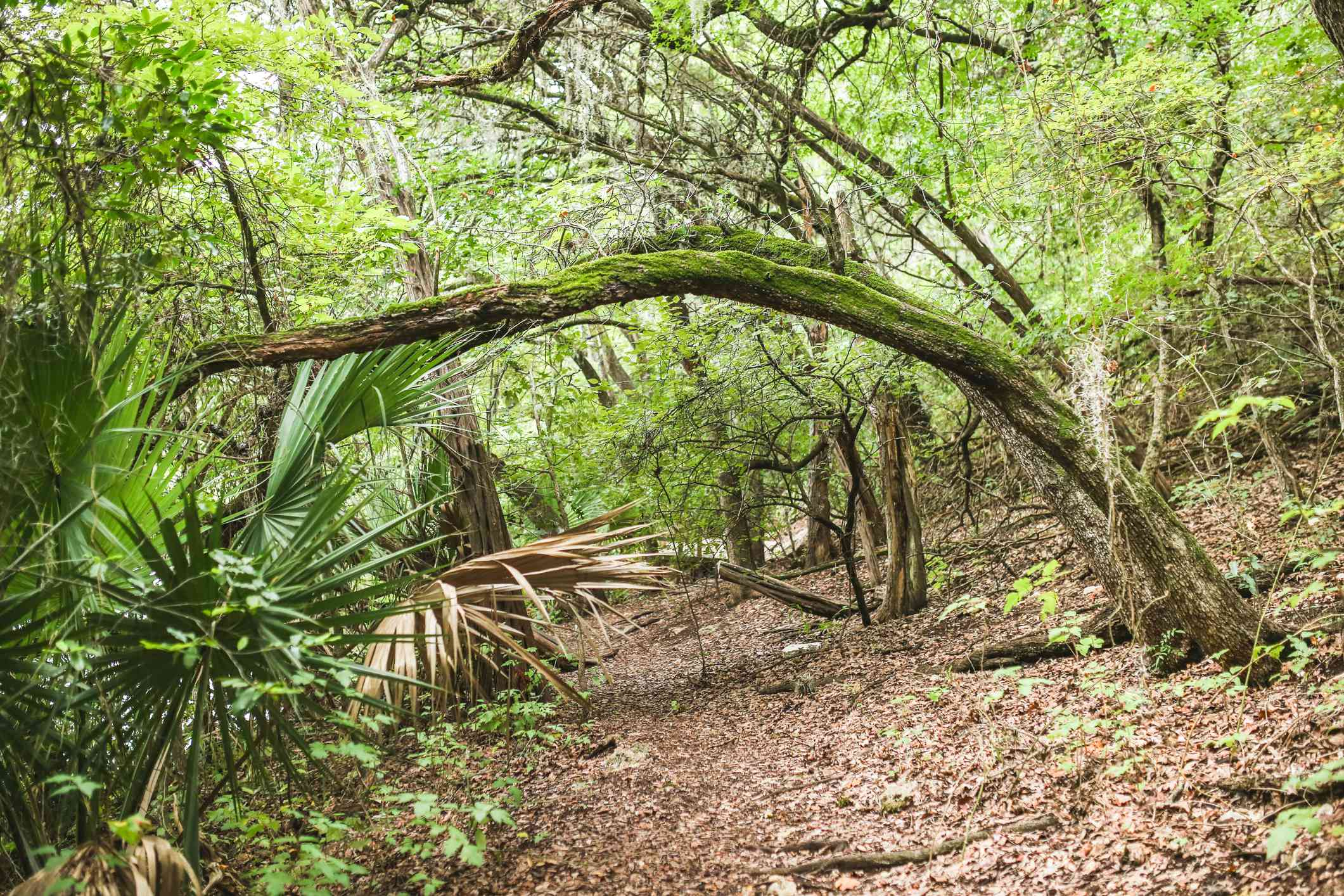 Mayfield Park Austin Texas hiking trail with a variety of plants
