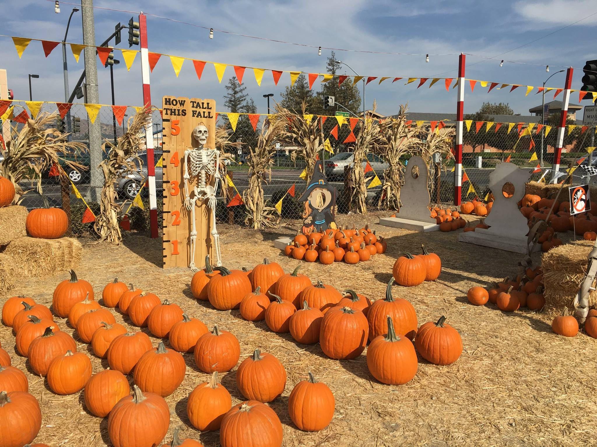 pumpkin patch east long island