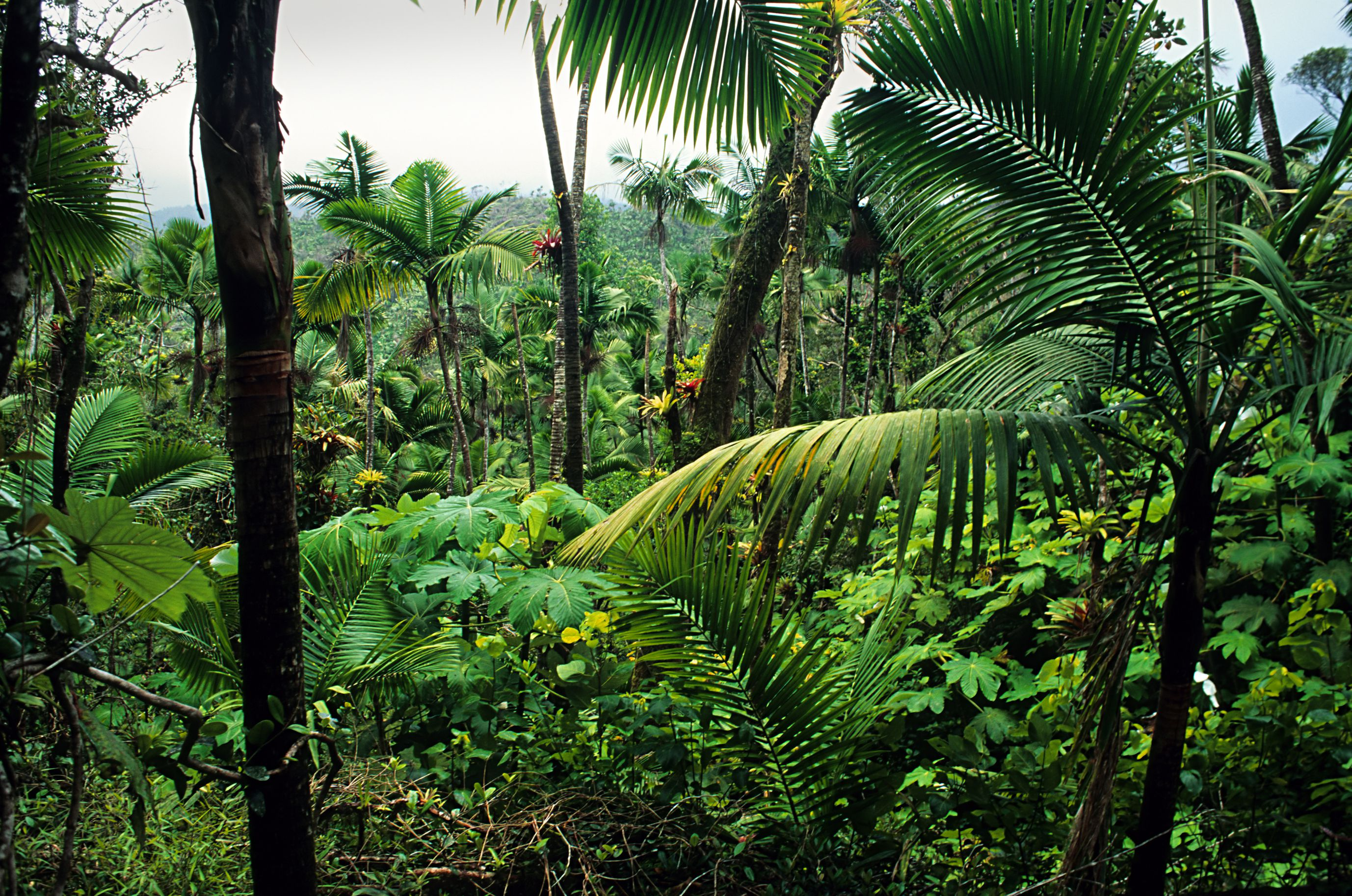 Caribbean National Forest, El Yunque